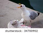 Seagull Calling In Between...