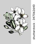 jasmine flowers vector... | Shutterstock .eps vector #347062640