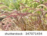 Grass With A Warm Light In The...
