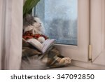 Cat Sweater  Reading A Book...