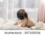 Stock photo cute puppy 347100536