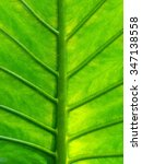 Small photo of The texture of the leaf (Alocasia)