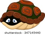 Cute Turtle Hides In Its Shell