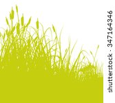 green reeds at the edge of the...   Shutterstock .eps vector #347164346