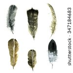 hand drawn watercolor feather... | Shutterstock . vector #347184683