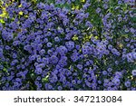 A Scattering Of Blue Flowers