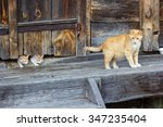 red and white cat with small... | Shutterstock . vector #347235404