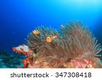 anemone and clownfish on coral... | Shutterstock . vector #347308418