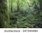 yakushima forest | Shutterstock . vector #347344484