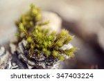 Moss  Leaf On Moss  Moss Autum...