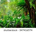 lush tropical green jungle  | Shutterstock . vector #347416574