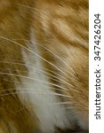 Small photo of Close-up of whiskers of a ginger cat background