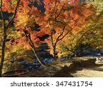 autumn in japan | Shutterstock . vector #347431754