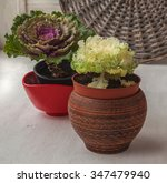 Two Of Head Decorative Cabbage...