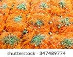 Fresh Orange Kunafe In The...