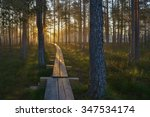 boardwalk through the forest...