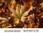 Small photo of Photo closeup of autumn colorful yellow golden thick blanket of fallen dry maple leaves on ground deciduous abscission period over forest leaf litter background, horizontal picture