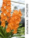 Small photo of vanda orchid in the garden.