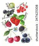 berries watercolor | Shutterstock . vector #347625308