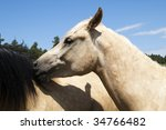 a pair of horses playing | Shutterstock . vector #34766482
