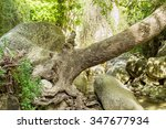 Fallen Tree Stem Over River An...