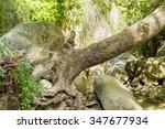 Fallen Tree Stem Over River An...