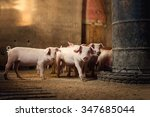 Little pigs at farm waiting for ...