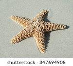 Small photo of starfish; echinoderm