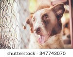 abandoned dog locked in a cage... | Shutterstock . vector #347743070