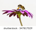 Bee Anh Flower
