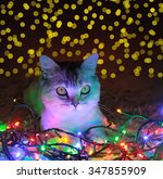 cat with garland | Shutterstock . vector #347855909