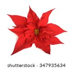 Poinsettia Flower Isolated On...