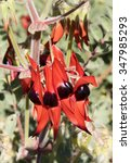 Western Australian Wildflowers...