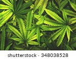 Cannabis Texture Marijuana Lea...