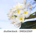 plumeria flower in the garden... | Shutterstock . vector #348161069