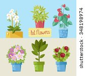 set of single home potted... | Shutterstock . vector #348198974