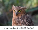 Stock photo a portrait of brown fish owl 348236063