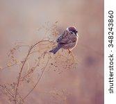 Photo Of Sparrow Bird Sitting...