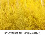 yellow flowers and morning dew... | Shutterstock . vector #348283874