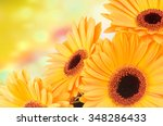 orange gerber flowers on color... | Shutterstock . vector #348286433