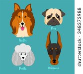 different breeds of dogs.... | Shutterstock .eps vector #348373988