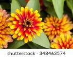 orange and red of zinnia flower ...   Shutterstock . vector #348463574