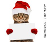 Funny Cat In Christmas Hat...