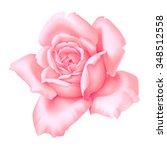 Rose Pink Flower Decorative...
