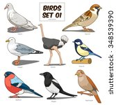 bird set cartoon colorful...