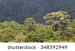 forest | Shutterstock . vector #348592949