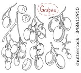 grapes  set of hand drawn... | Shutterstock .eps vector #348612950