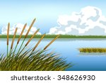 Lake Scape And Reed Grass Vector