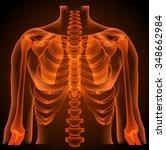 human anatomy  thorax  neon... | Shutterstock .eps vector #348662984