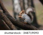 squirrel | Shutterstock . vector #348719093